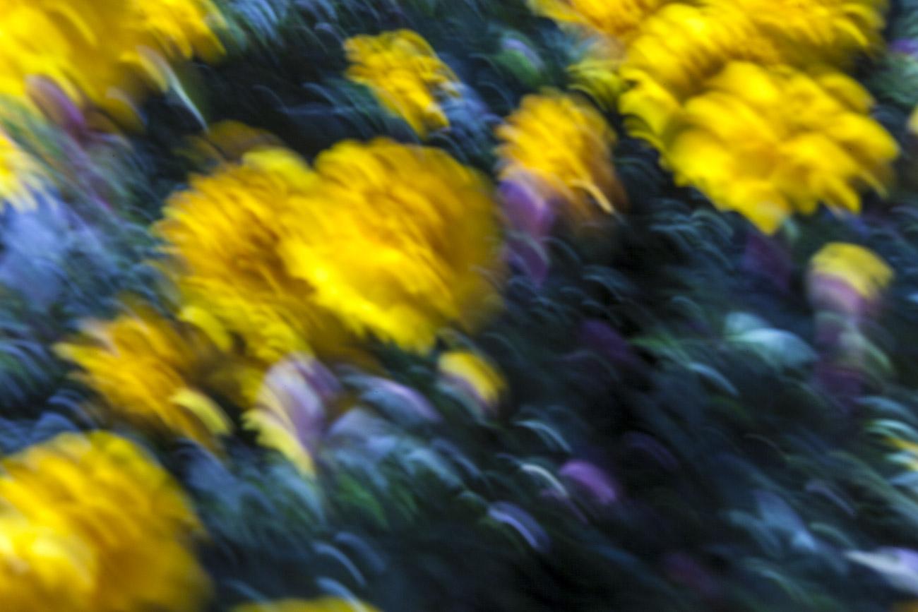fotografare i fiori flower painting