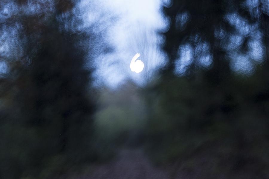 in cerchio alla luce della luna