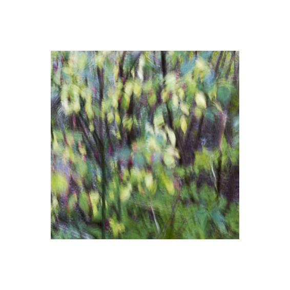 regalare stampe fotografiche fine art serie numerate e limitate di alle bonicalzi flower painting