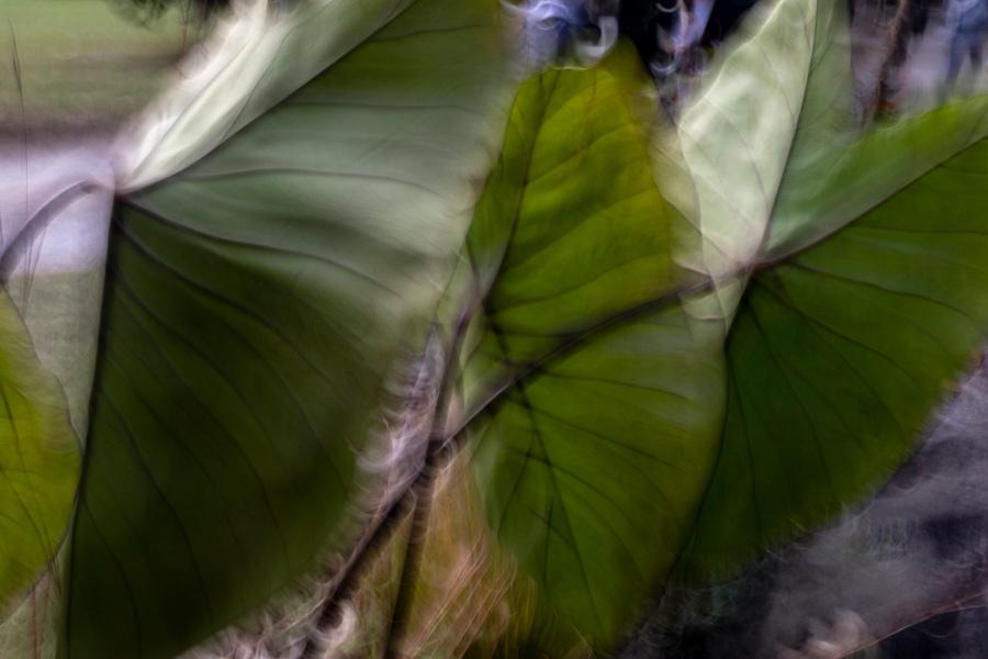 Orticolario-2019-photo-paintings-allebonicalzi-8