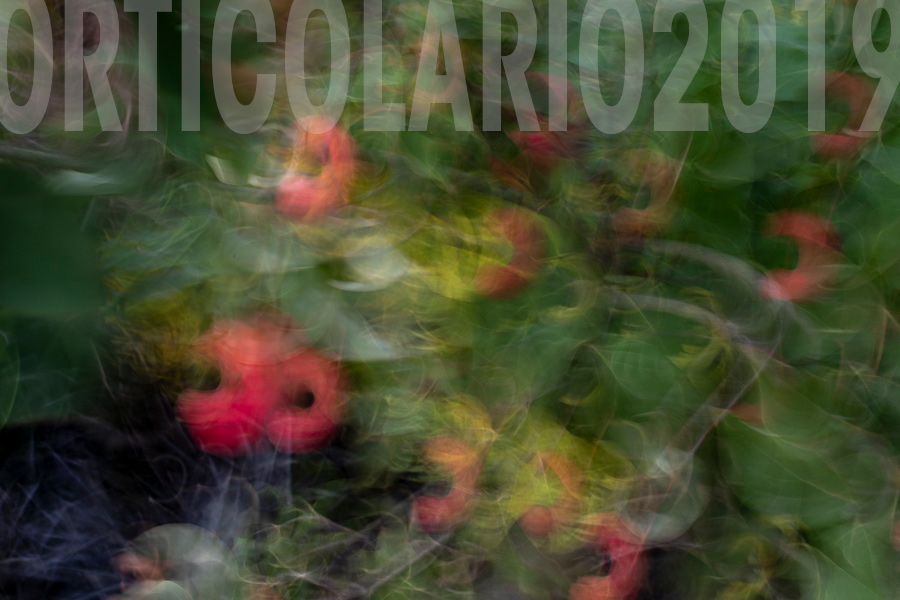 Orticolario-2019-photo-paintings-allebonicalzi-7